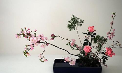 categoria-jardinagem-mikami-hortifruti-e-produtos-orientais