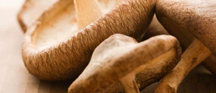 Curiosidades Sobre o Cogumelo | Mikami