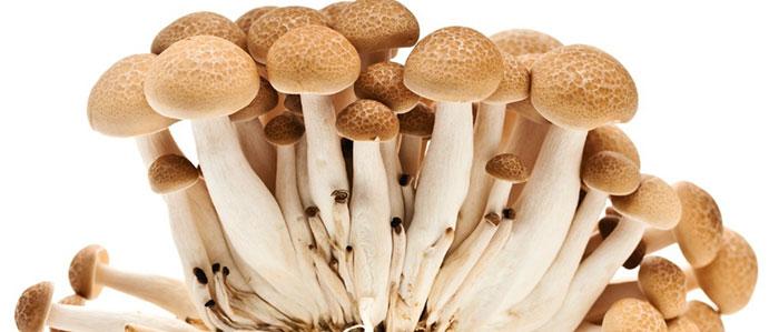 Cogumelos se torna ingrediente em ascensão na gastronomia brasileira